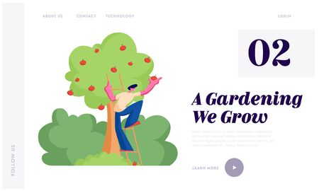 Man Farmer Pick Apples to Basket. Male Gardener Character Harvesting Ripe Fruits from Organic Tree in Garden, Healthy Nutrition Website Landing Page, Web Page. Cartoon Flat Vector Illustration, Banner Illustration