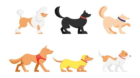 Set of Cute Dogs of Different Breeds Isolated on White Background. Poodle, Dachshund and Husky Pets