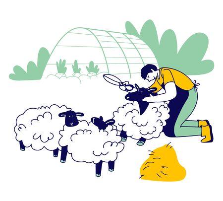 Man Farmer Shearing Sheep for Wool. Sheepshearer Character at Working Process on Farm. Shearer Man Removing Sheep Wool. Ewe Having Fleece Sheared Off Cartoon Flat Vector Illustration, Line Art
