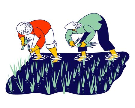 Chinese or Thailand Farmers Characters Soaked with Water and Mud Planting, Grow and Collecting Rice in Rainy Season. Workers in Thai or China Working on Field. Linear People Vector Illustration