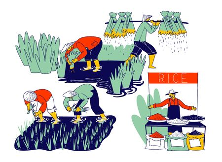 Farmers Characters Soaked with Water and Mud Planting and Grow Rice in Rainy Season. Farmer in Thailand or China Selling Different Types of Rice Grain on Market. Linear People Vector Illustration