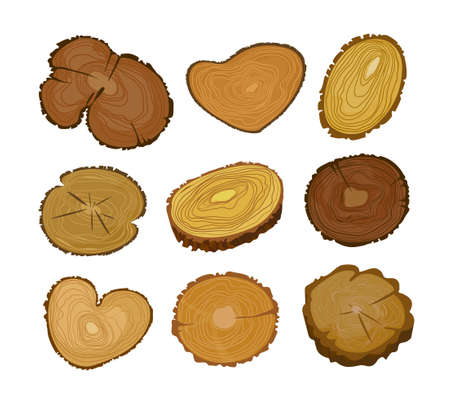 Set of Wooden Tree Round Slices with Age Rings and Cracks Cross Section, Saw Cut Tree Trunks Isolated on White Background. Design Elements, Circular Log Pieces. Cartoon Vector Illustration, Icons Banco de Imagens - 150825672