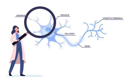 Tiny Scientist Female Character Wearing White Medical Robe Learning Human Neurons Scheme in Scientific Laboratory Illustration