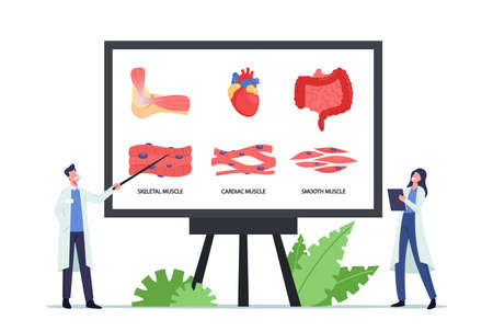 Muscular Health Concept. Tiny Doctors at Huge Board with Infographics Presenting Skeletal, Cardiac and Smooth Muscles