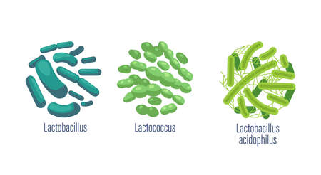 Set of Probiotic Bacteria Lactobacillus, Lactococcus and Acidophilus Good Microbes for Gut Health and Microbial Flora