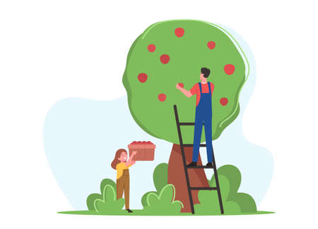 Farmers Family Father and Daughter Pick Apple Harvest to Basket in Orchard. Gardener Characters Harvesting Ripe Fruits