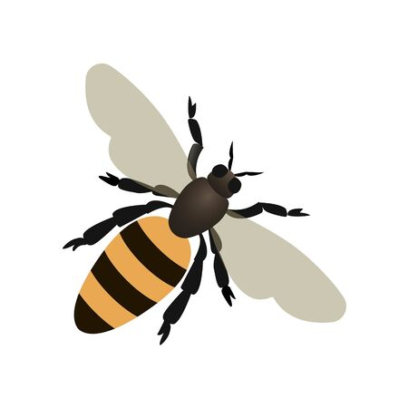Bee, wasp on white background. Vector illustration in trendy flat style. EPS 10.