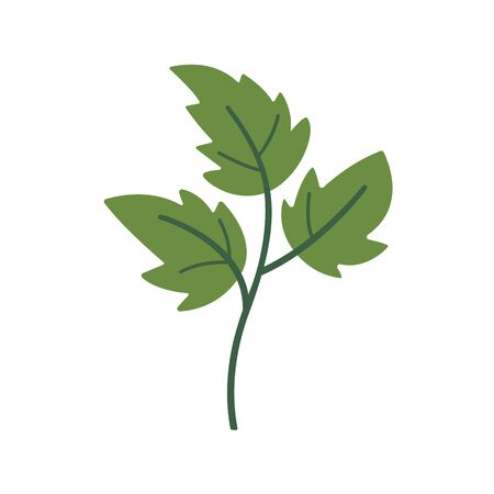 Green parsley on white background. Vector illustration in trendy flat style. EPS 10.