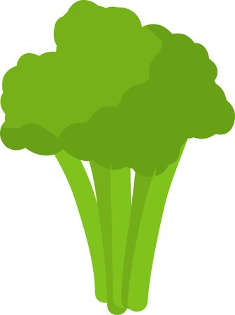 Broccoli Vegetable Isolated on White Background Vector Cooking Ingredient.