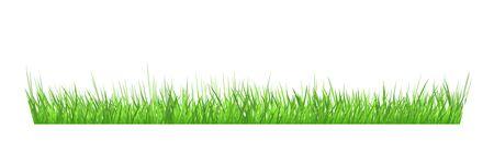 Green grass border on white background. Stock Illustration