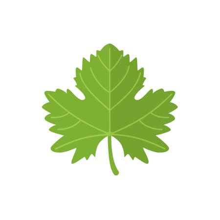 Grape Wine Leave Green on white background. Vector illustration.