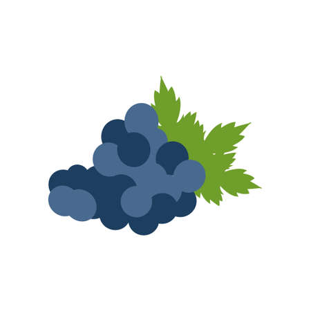 Bunch of grapes with leaf flat on white background. Vector illustration.