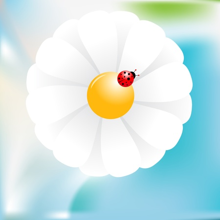 Pattern with ladybird and flower on a background. Vector