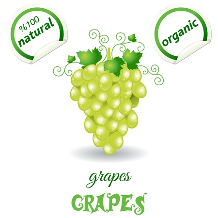 Bunches of grapes  Vector Stock Vector - 21448925