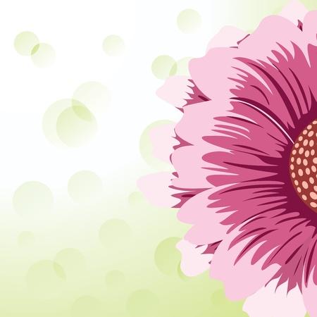 gerbera daisy: Gerbera Daisy Vectores