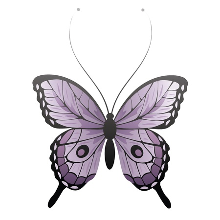 butterfly isolated: Vector butterfly Illustration