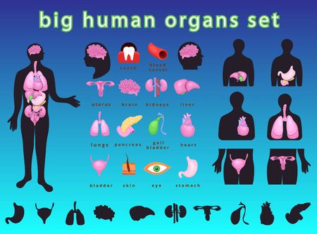 Realistic internal human body organs.Internal human body organs system.Modern flat cartoons vector illustration Banque d'images - 129205581