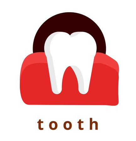 Realistic healthy strong human tooth in mouth, in gum. Modern flat cartoons style vector illustration icons. Isolated on white background. Tooth, stomatology, dentist. Realistic human tooth.