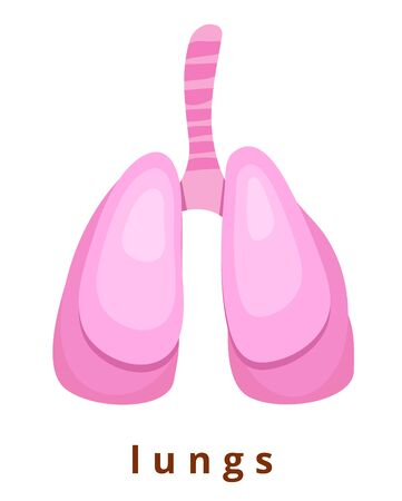 Human internal organ - realistic lungs with the name Anatomy Pink human lungs Human body part Modern flat cartoons vector illustration icons Isolated on white Realistic lungs Biology, anatomy Banque d'images - 129206283