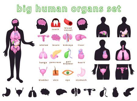 Realistic internal human body organs.Internal human body organs system.Modern flat cartoons vector illustration on blue.