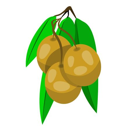 Three stuffed olives on toothpick. Olives on cocktail sticks. Modern flat cartoons style vector illustration icons. Isolated on white background. Cocktail olive for drink, alcohol, sandwich.;