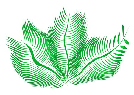 Tropical exotic floral palm leaves isolated on white background. Flat cartoon vector illustration icon. green leaf of palm tree. Stock Illustratie
