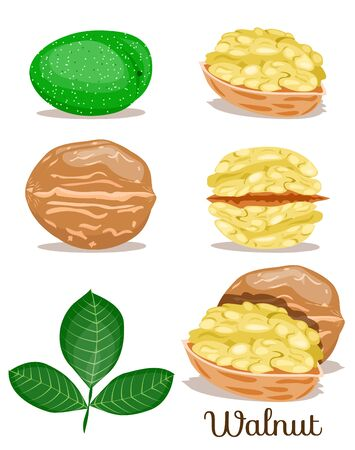 Set of nuts poster,in shell,half,whole,cut, peeled Flat cartoon vector illustration on white. Stock Illustratie