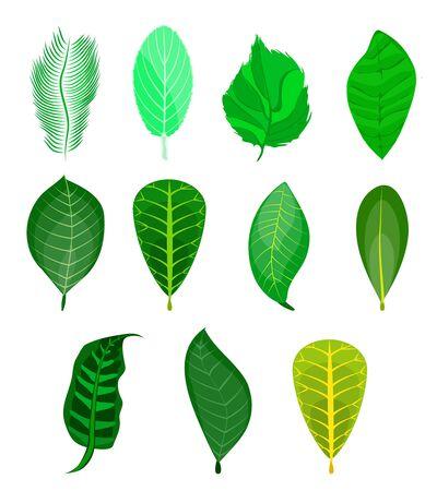 Set of different green leaves on nuts. Set of nuts: nutmeg,macadamia,cashew,pistachio,almond,hazelnut,pecan,peanut,coconut,walnut,brazilian,cedar,pine nut. Cartoon. Green leaf of tree,plant,fern,palm Ilustracja