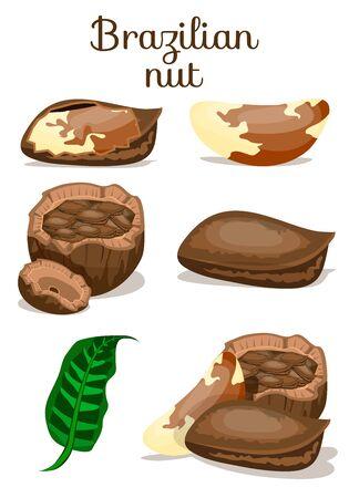 Set of nuts poster Flat cartoon vector illustration on white. Stockfoto - 131795707