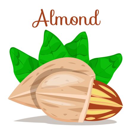 Set of nuts poster Flat cartoon vector illustration on white. Stockfoto - 131794768