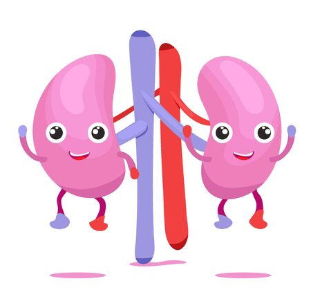 Human internal organ character smile funny cute twins bladder with eyes, legs and hands.