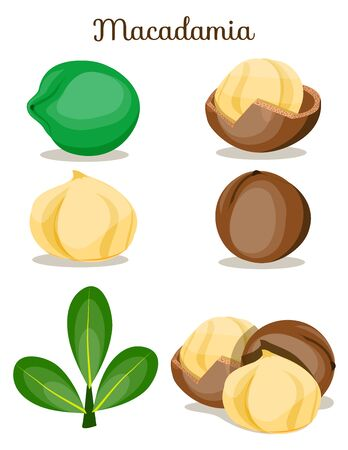Set of nuts poster Flat cartoon vector illustration on white. Stockfoto - 131794915