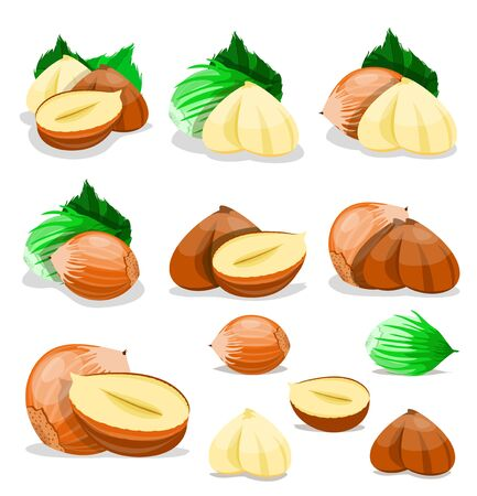 Set of nuts poster Flat cartoon vector illustration on white.