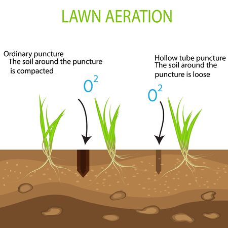 Gardening of lawns, landscape design services. Vector isolated on a white background. A green lawn with on the ground in the context of the advantages of the aeration tool with hollow pipes in comparison with the usual method.