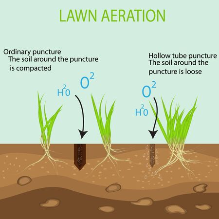 Gardening of lawns, landscape design services. Vector isolated on a blue background. A green lawn with on the ground in the context of the advantages of the aeration tool with hollow pipes in comparison with the usual method.