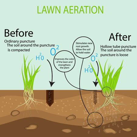 Gardening of lawns, landscape design services. Vector illustration. Green lawn on the ground in the context of the benefits of aeration of a hollow tube tool compared to the conventional method.