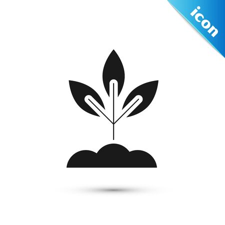 Black Plant icon isolated on white background. Seed and seedling. Leaves sign. Leaf nature. Vector Illustration  イラスト・ベクター素材