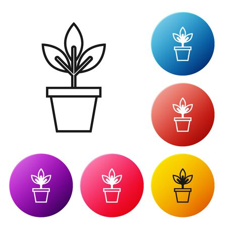Black line Flowers in pot icon isolated on white background. Plant growing in a pot. Potted plant sign. Set icons colorful circle buttons. Vector Illustration