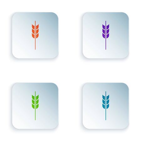 Color Cereals set with rice, wheat, corn, oats, rye, barley icon isolated on white background. Ears of wheat bread symbols. Set icons in colorful square buttons. Vector Illustration