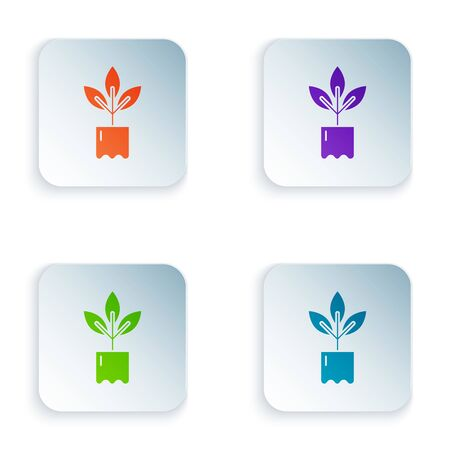 Color Plant in bottle icon isolated on white background. Seed and seedling. Leaves sign. Leaf nature. Set icons in colorful square buttons. Vector Illustration