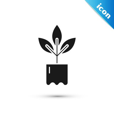 Black Plant in bottle icon isolated on white background. Seed and seedling. Leaves sign. Leaf nature. Vector Illustration