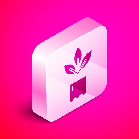 Isometric Plant in bottle icon isolated on pink background. Seed and seedling. Leaves sign. Leaf nature. Silver square button. Vector Illustration Illustration