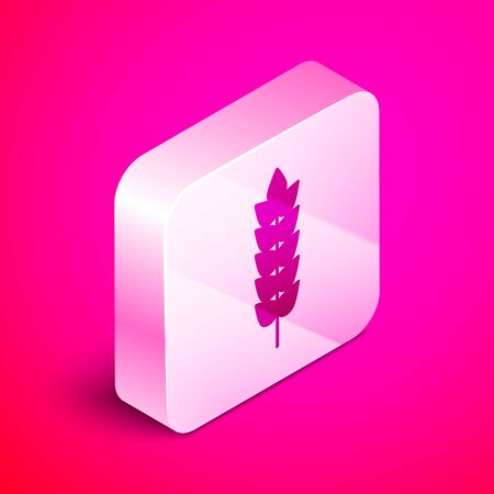 Isometric Cereals set with rice, wheat, corn, oats, rye, barley icon isolated on pink background. Ears of wheat bread symbols. Silver square button. Vector Illustration