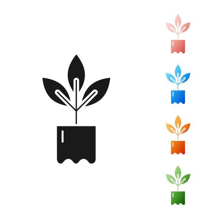 Black Plant in bottle icon isolated on white background. Seed and seedling. Leaves sign. Leaf nature. Set icons colorful. Vector Illustration Çizim
