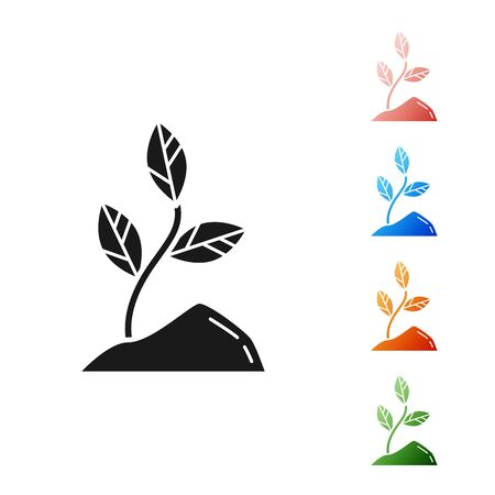 Black Sprout icon isolated on white background. Seed and seedling. Leaves sign. Leaf nature. Set icons colorful. Vector Illustration Çizim