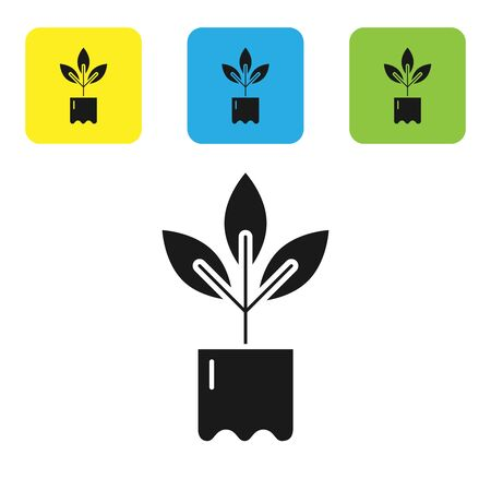 Black Plant in bottle icon isolated on white background. Seed and seedling. Leaves sign. Leaf nature. Set icons colorful square buttons. Vector Illustration Иллюстрация