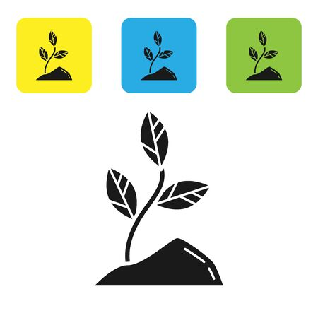 Black Sprout icon isolated on white background. Seed and seedling. Leaves sign. Leaf nature. Set icons colorful square buttons. Vector Illustration