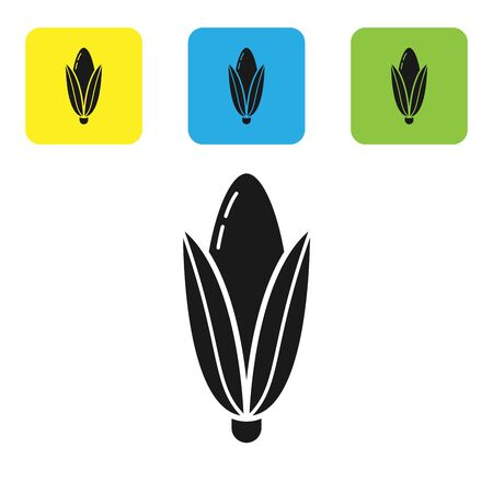Black Corn icon isolated on white background. Set icons colorful square buttons. Vector Illustration