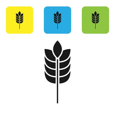 Black Cereals set with rice, wheat, corn, oats, rye, barley icon isolated on white background. Ears of wheat bread symbols. Set icons colorful square buttons. Vector Illustration