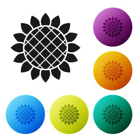 Black Sunflower icon isolated on white background. Set icons colorful circle buttons. Vector Illustration